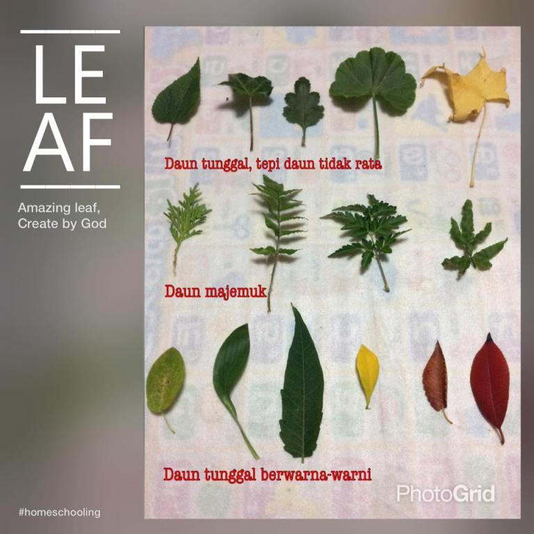 amazing leaf.jpg